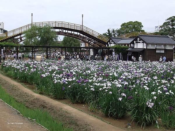 1280px-Itako_Maekawa_Iris_Garden_20110615a