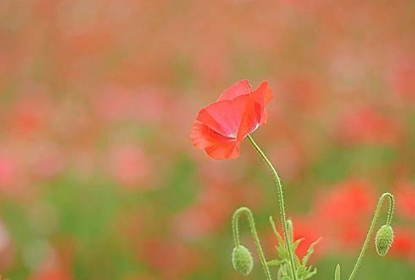 poppy6209