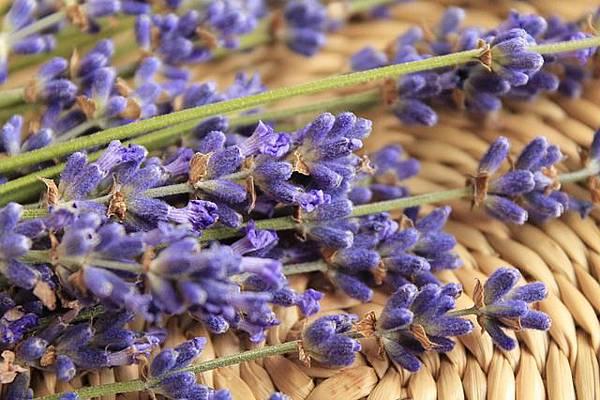 lavender-730740_640