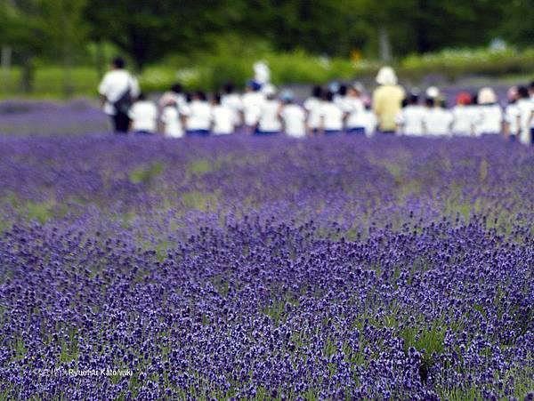Lavender_Picnic_-_panoramio