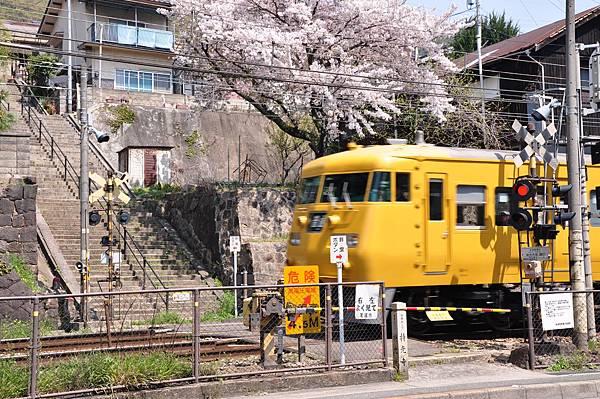 No2685_持光寺踏切の桜