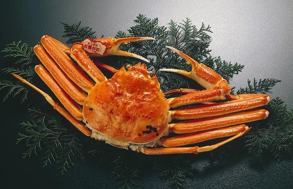 松葉蟹.jpg