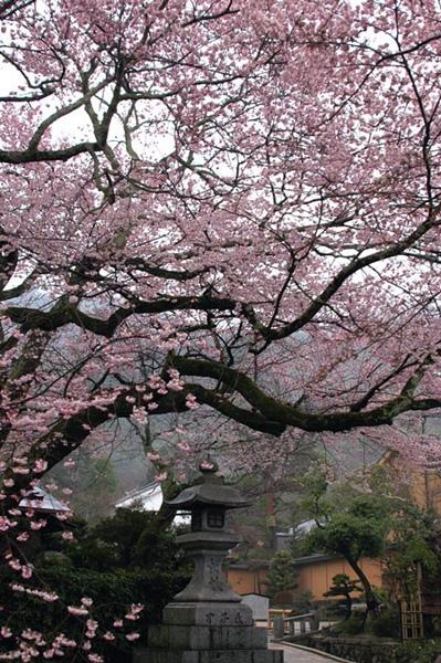 kise-saku_k21.jpg