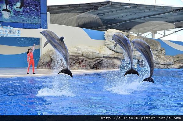 海豚1375111544-1214791497_n