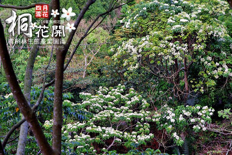 青桐林生態產業園區