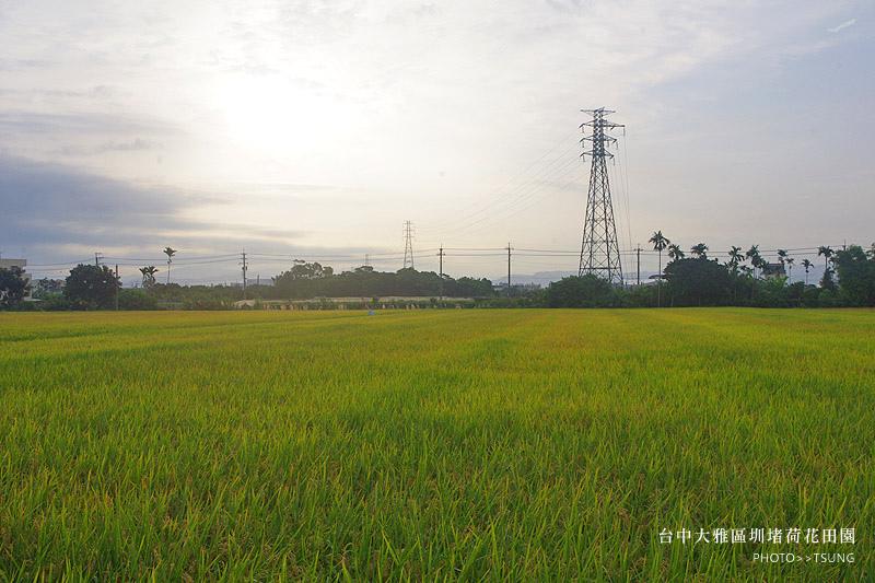 2014初夏賞荷花私房景點