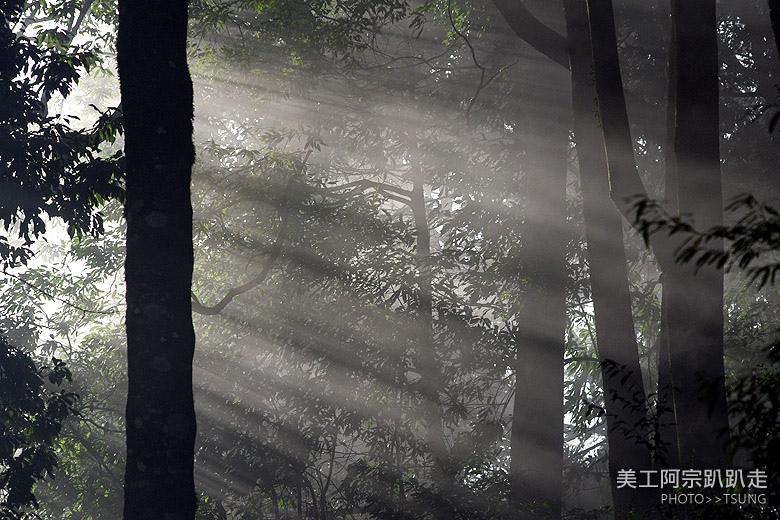 大雪山林道賞楓之旅