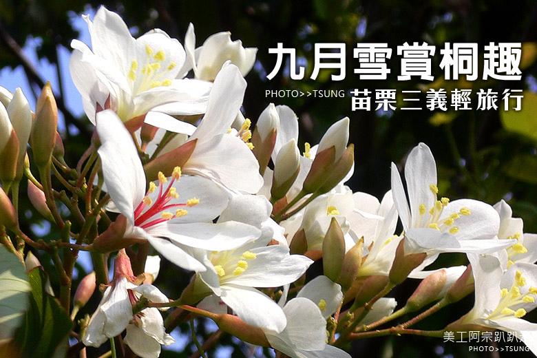 九月雪三義賞桐輕旅行
