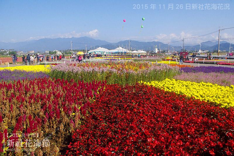 2015新社花海