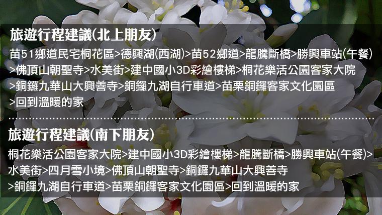 2016桐花季苗栗台中賞花景點