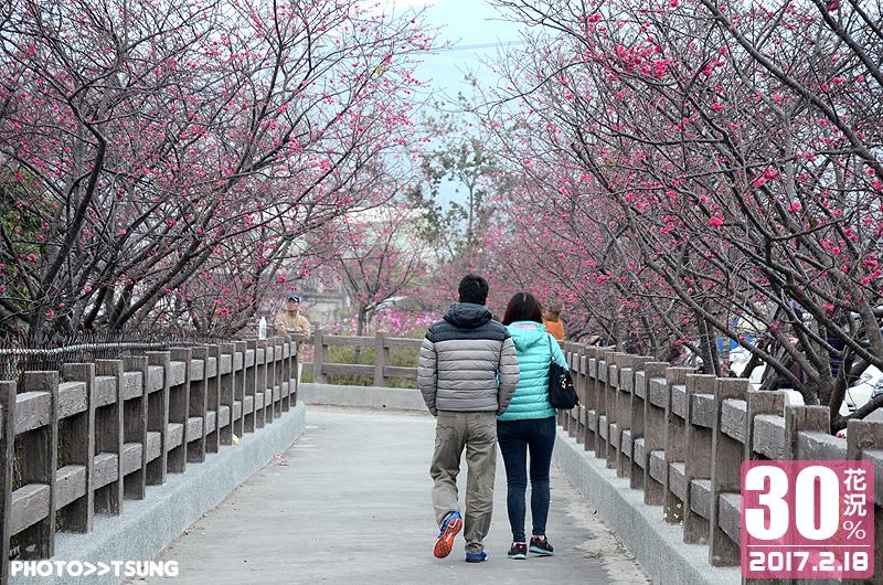 泰安櫻花祭