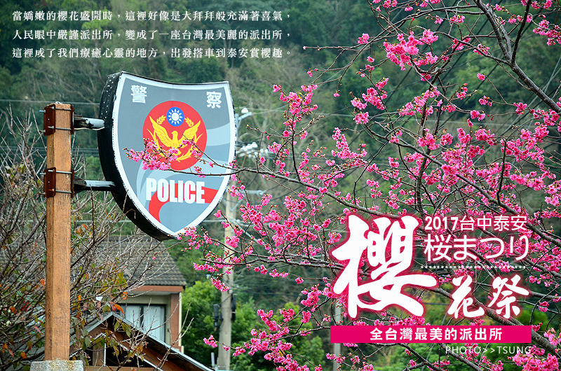 2017泰安櫻花花況