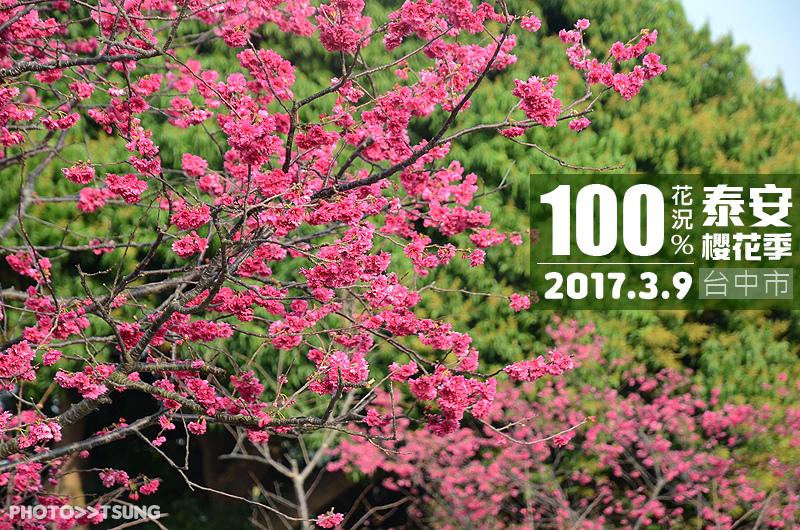 2017台中賞櫻