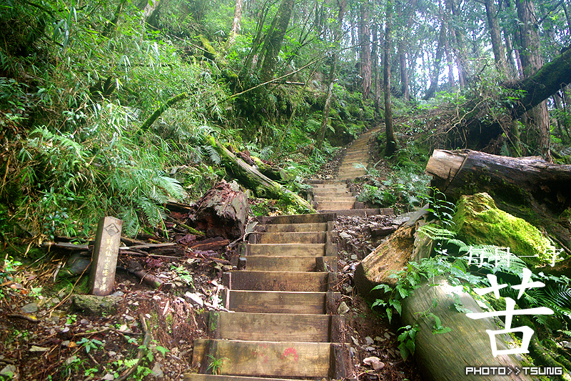 八仙山主峰步道