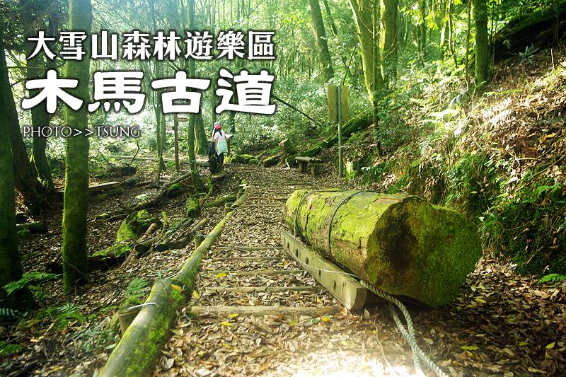 大雪山國家森林遊樂區【木馬道步道】