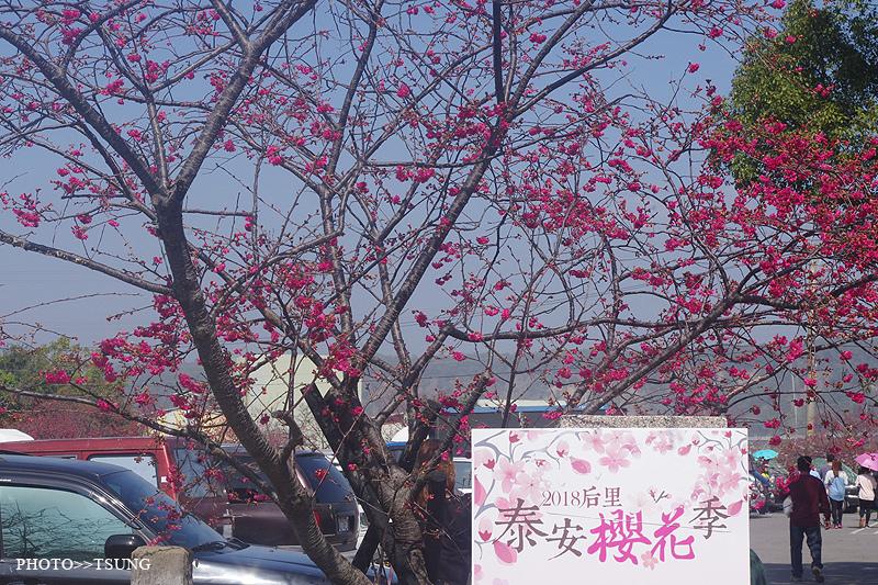 2018台中賞櫻