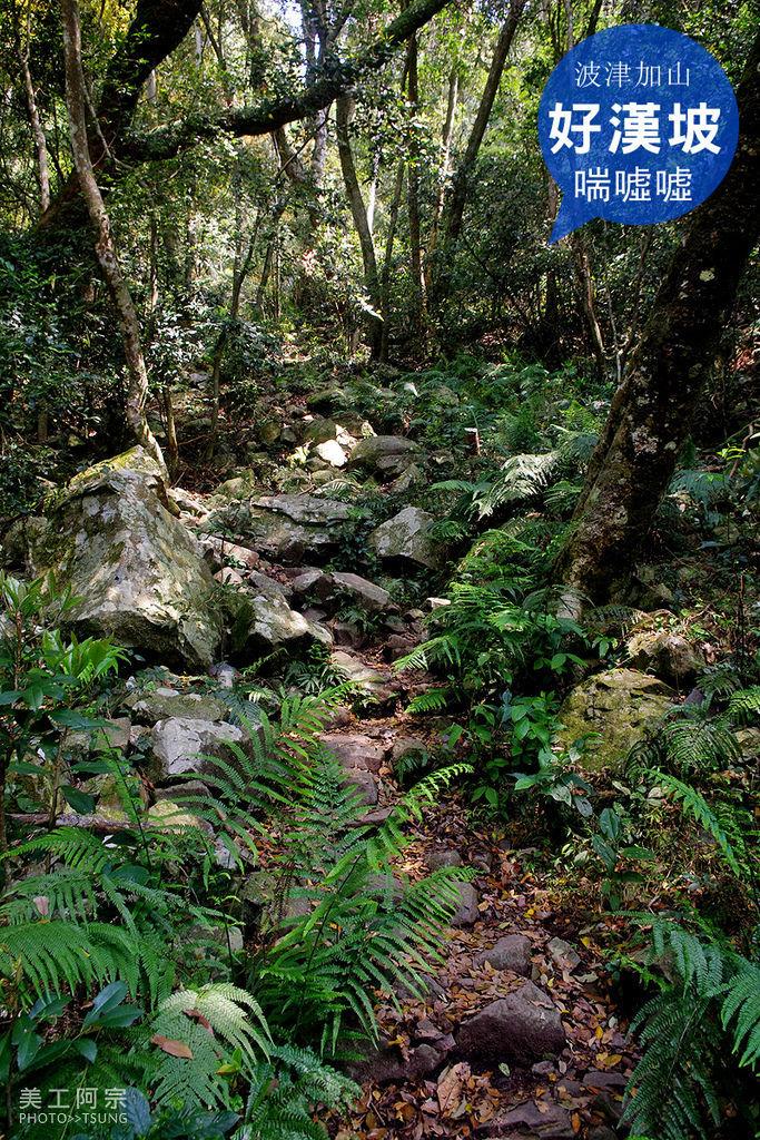 波津加山(谷關線)