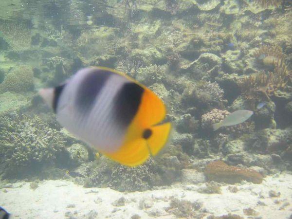 帛琉水族館