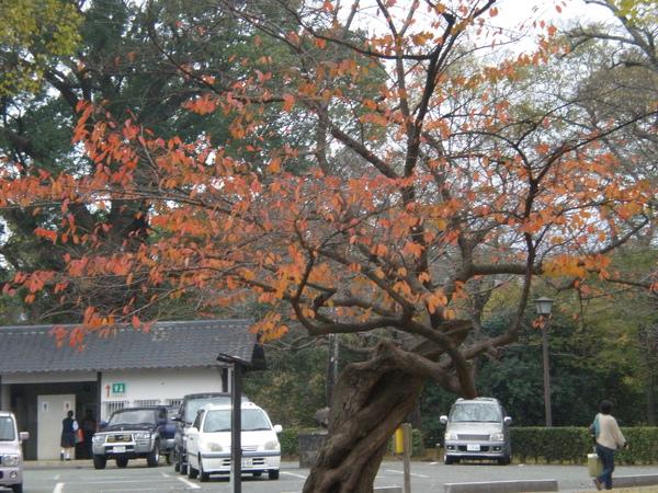 熊本城外.JPG