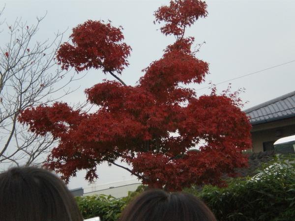 熊本工藝會館6.JPG