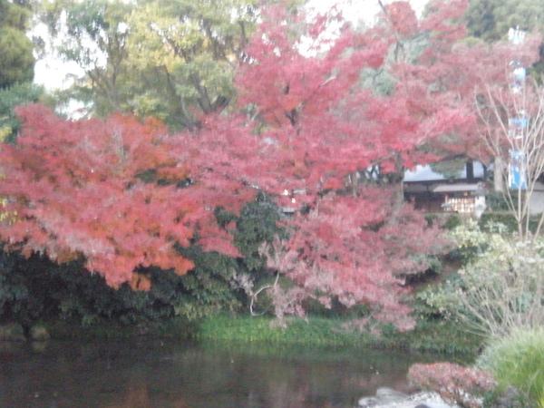 水前寺公園4.JPG