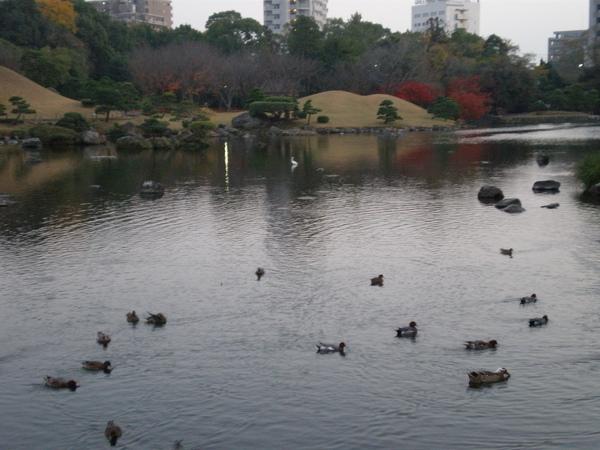 水前寺公園5.JPG