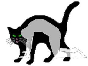 cat_pose.jpg
