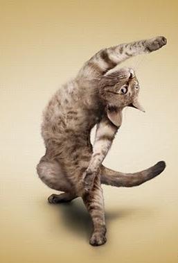 Funny_Yoga_Cats_2010_Calendar_14.jpg