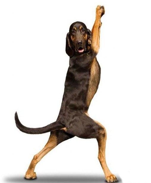 yoga_dogs.jpg