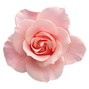 花瓣電波私密處美白私密處保養私密處黑皺萎縮乾癟陰唇鬆弛老化私密處緊實膠原蛋白05