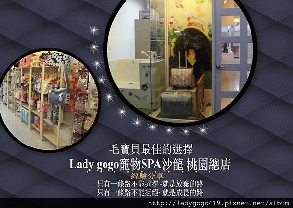 Lady gogo寵物SPA沙龍總店經驗分享
