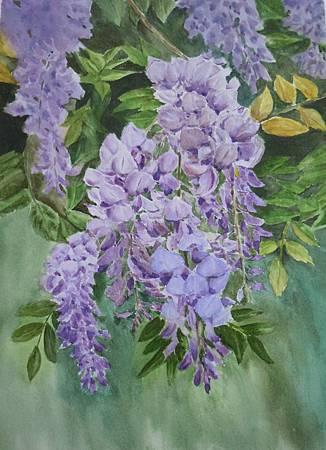 在美好的春晨裡,與紫藤花的美麗相遇
