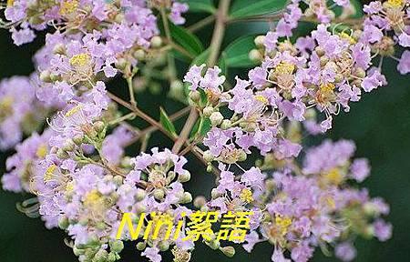 紫微3.1.jpg