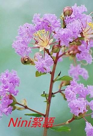 紫微4.1.jpg