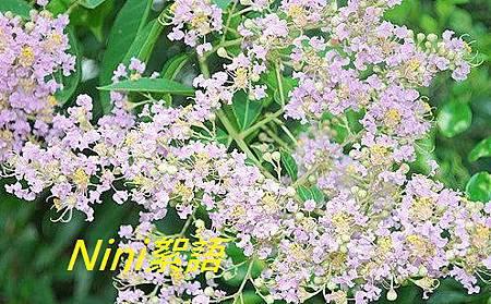 紫微2.1.jpg