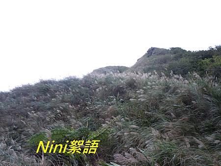 DSCN8810.1.jpg