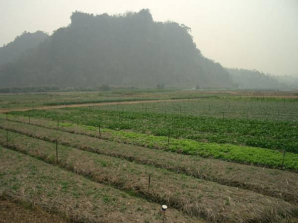แปลงปลูกผักเกษตรอินทรีย์ 001