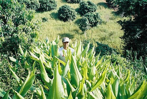 Plantation farm in Chiengrai 2