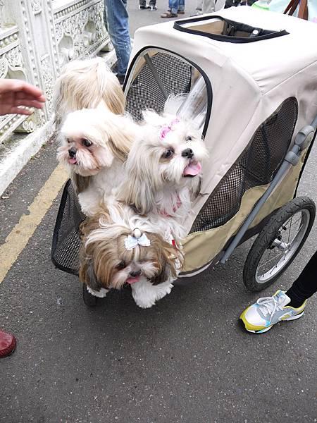 可愛的一群狗狗