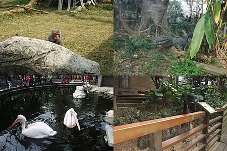 新竹zoo-2.jpg