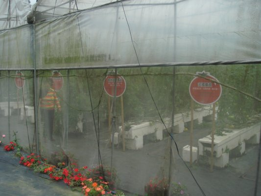 旁邊的番茄園