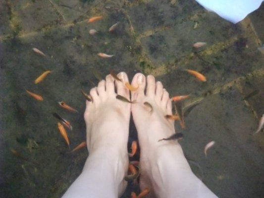 是溫泉魚在咬我,它們在吃我的角質,幫我免費spa呢