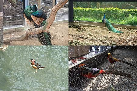 新竹zoo-1.jpg