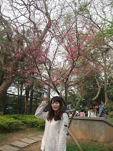 我最樂意來看櫻花了~