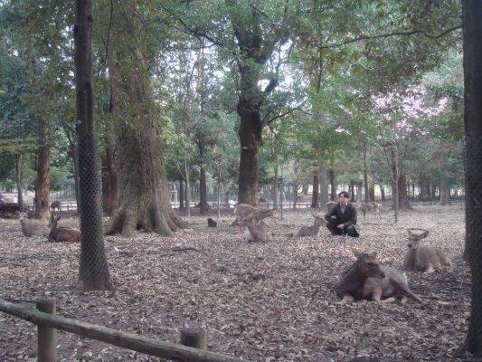 奈良公園到處都是鹿