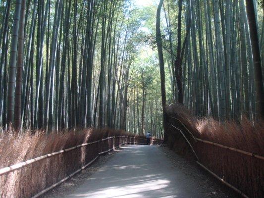 竹子也可以這麼美麗