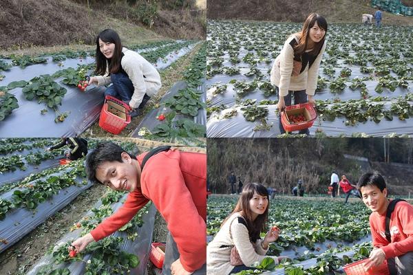 大湖採草莓-1.jpg