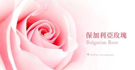 保加利亞玫瑰.jpg