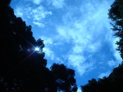 明治神宮的天空