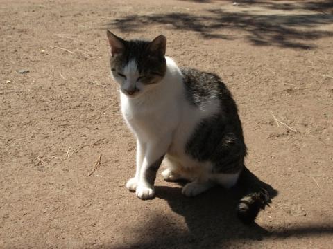濟州島獨立岩小貓